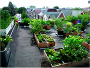City Rooftop Food Gardens
