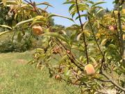 Lucinda Place Community Orchard