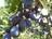 Bellingham Gleaning Netw…