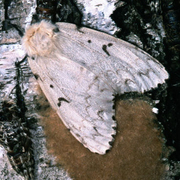 Invasive Arthropod Netwo…