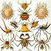 Arachnology Network