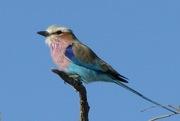 Birdwatching Entomologis…