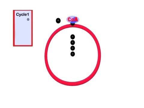 TBDBIL Performs the Krebs Cycle