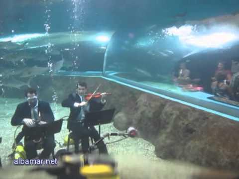 Aquarium: Anabel Veloso - Poema Sinfónico nº2