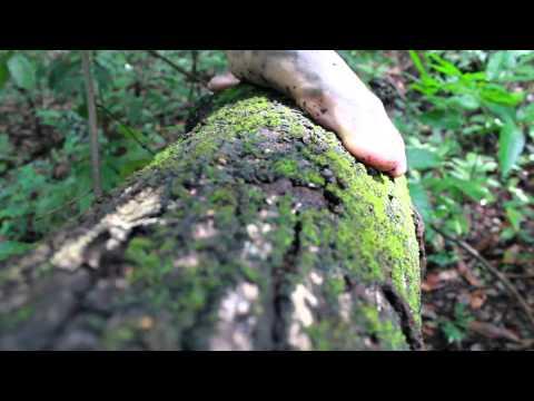 Flor da Mata (videodança)