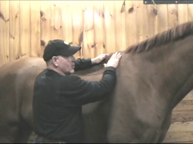 Equine Massage: Muscle Soreness in the Withers