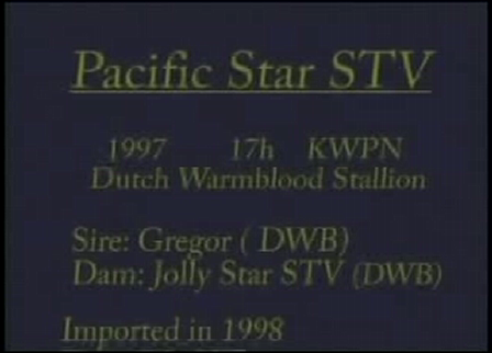 Pacific Star STV - Dutch Warmblood stallion; Approved CWHBA
