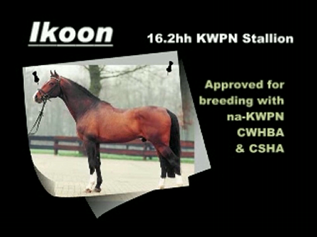 Ikoon - Dutch Warmblood Stallion owned by Creekside Farms