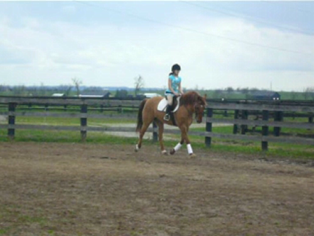 Trot and Canter with Shae