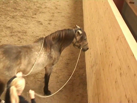 Long Reining 11 Shoulder out; more info