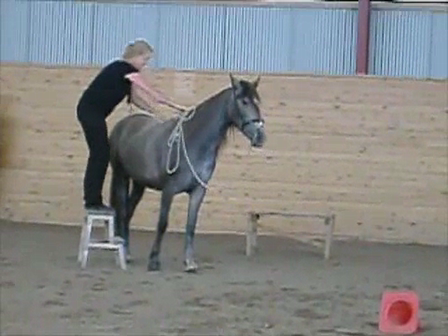 """Destinadas first """"chair game"""" (teaching a horse to stand for mounting)"""