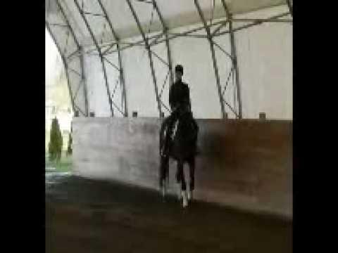 FOR SALE   2005 Dutch/Holsteiner mare