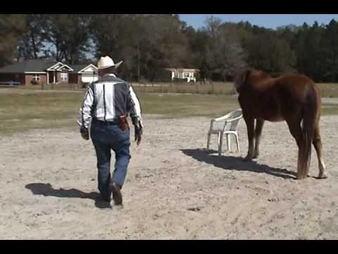 Break Time Hala Arabian Farm, 8 Mar 2010