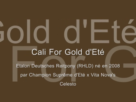 Cali For Gold d'Eté