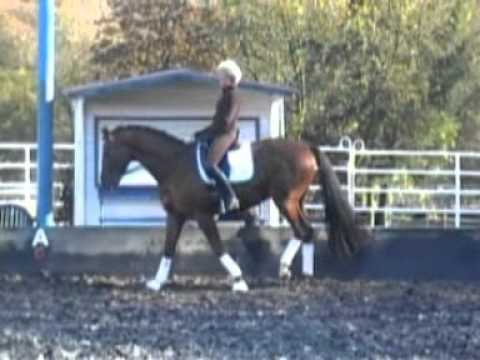 A Superb Example of How to Correctly Work a Dressage Horse