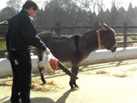 Now Here's A New Way to Groom Your Donkey/Horse!