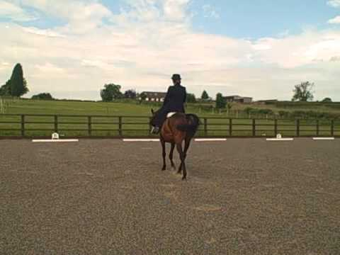 Pony Club level D Walk Trot Sidesaddle - Griffydam