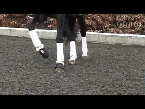 Dressage, Jumping, Lunging - All in HD Slo-Mo