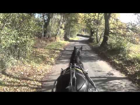 A 5 Year Old Dartmoor Hill Pony Takes a Drive