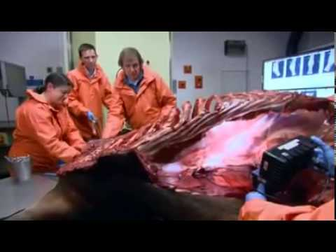 Warning Graphic: Take a Look Inside a Horse!