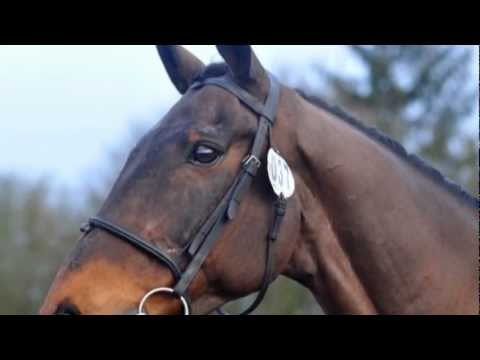 A Great Video Tribute to a Retired Event Horse