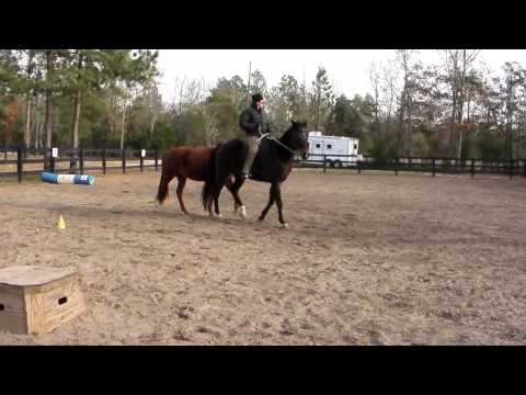 Encore Horse For Sale