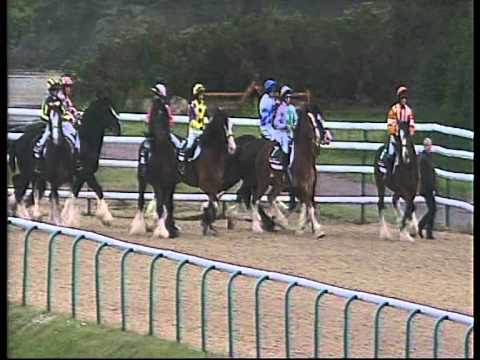 A Maiden Stakes Race - for SHIRES!