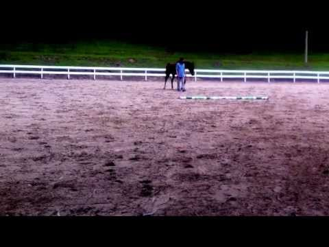 Teaching a Horse to Jump Through a Magnetic Connection