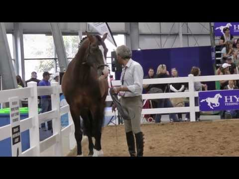 Suggestions for Settling the Nervous Horse