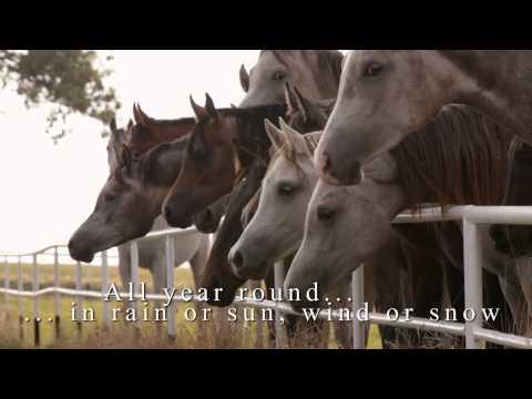 Janów Podlaski Arabian Horse Days 2014