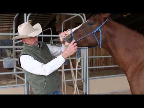 How to Inspect Your Horse's Mouth