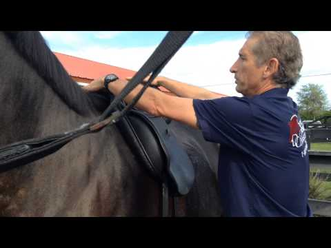 How to Check if Your Horse Saddle Fits