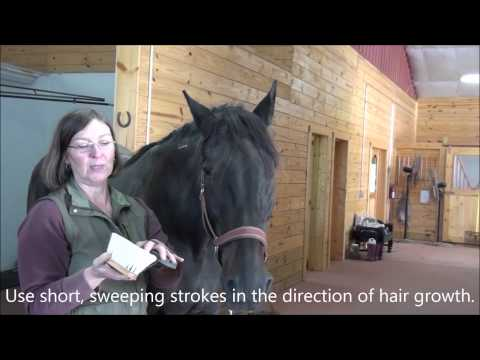 How to Groom Your Horse to Shine Naturally - Step 2: Flicking