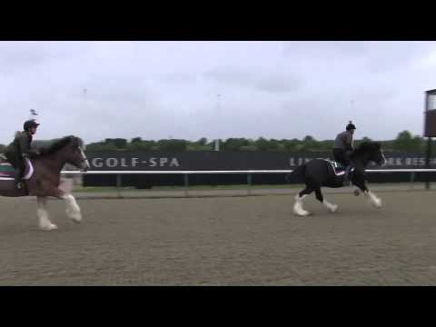 Shire vs. Clydesdale - Lingfield Racecourse