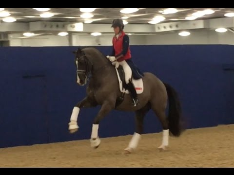 Valegro Retirement Warmup at Olympia