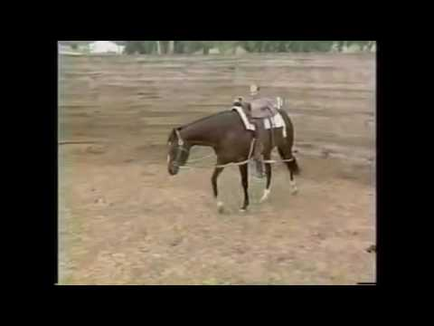 How to Long Line a Horse