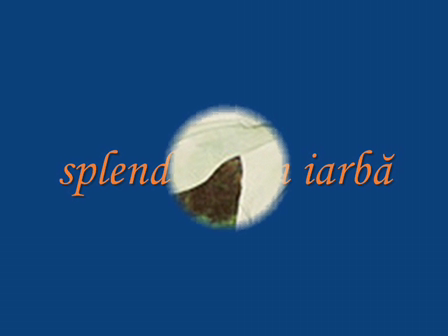 splendoare in iarba