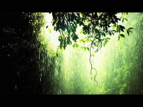 Relaxation Music - 1 Hour Gentle Rain Meditation