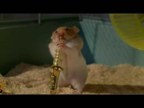 Clever Hamster's Jazz.flv