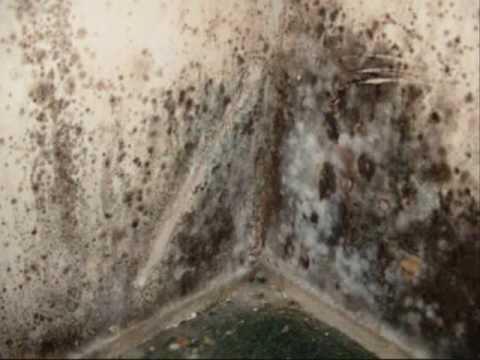 Mold Inspections and Testing Indianapolis Indiana