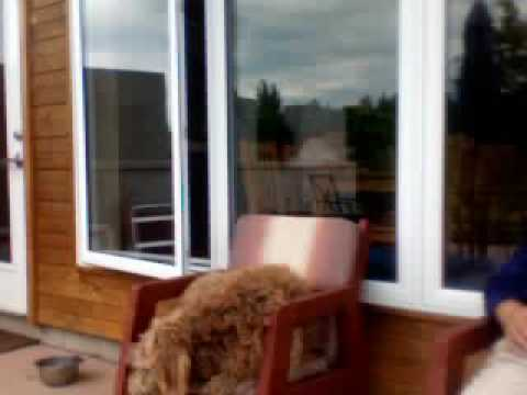 Bob the Dog, and the Zen of Being in the NOW,  at Sugar Ridge Retreat Center