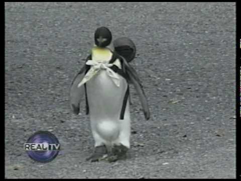 Pet Penguin Goes Shopping