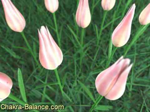 Chakra Meditation Balancing & Healing