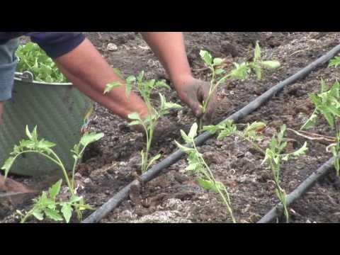 Video del Tercer Diplomado de Horticultura Protegida