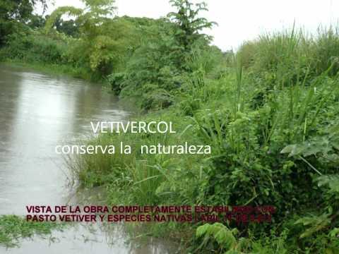 CONTROL DE EROSION REPRESA SANTA ANA, ESPINAL - TOLIMA - COLOMBIA.wmv