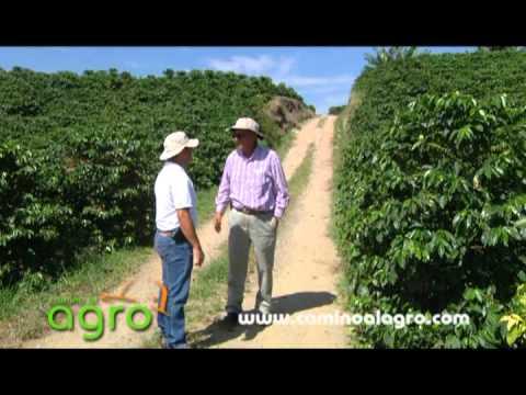 AGRO20: Roya del cafeto y su control