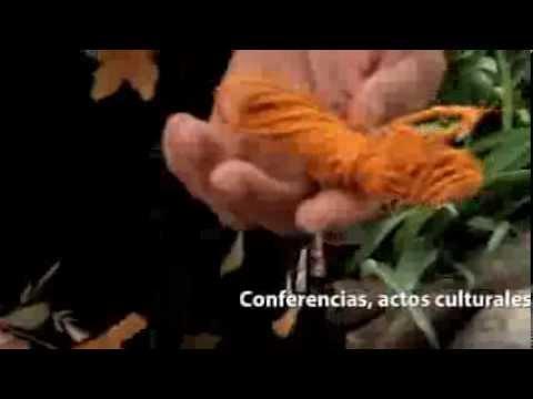 Promocional XIII encuentro nacional de fiqueros