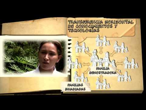 AGRO20: La FAO y la Agricultura Familiar: el caso de El Salvador