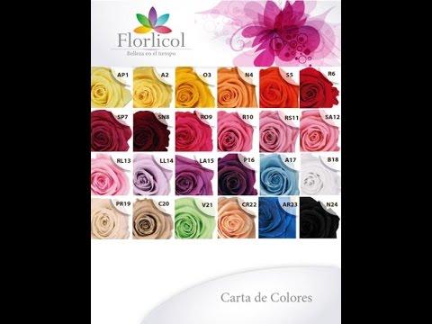 FLORLICOL Flores Liofilizadas de Colombia  Flores de Larga Duración