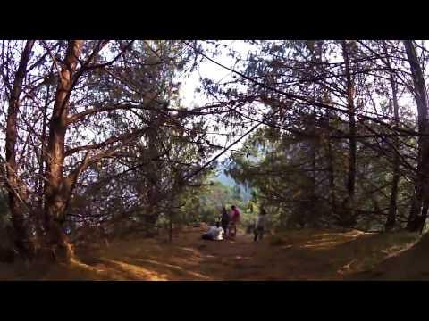 Quebrada la Vieja- Bosque de pinos